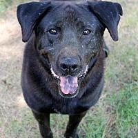 Adopt A Pet :: Baylee - Memphis, TN