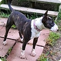 Adopt A Pet :: Ivy - Glenwood, AR
