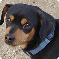 Adopt A Pet :: CHESTER - Riverside, CA