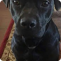 Adopt A Pet :: Lyric - Hagerstown, MD