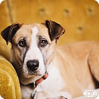 Adopt A Pet :: Chrissy - Portland, OR