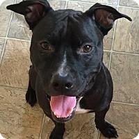 Adopt A Pet :: JJ - Sharon, CT