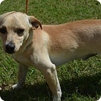 Adopt A Pet :: ELROY - New Iberia, LA