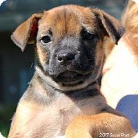 Adopt A Pet :: Faneuil - Bedford, VA