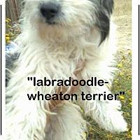 Adopt A Pet :: Panda (in adoption process) - El Cajon, CA