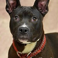 Adopt A Pet :: Banner - Newnan City, GA