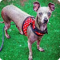 Adopt A Pet :: Egon - Henderson, NV