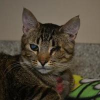 Adopt A Pet :: Lucy (Kellie) - Elkhorn, WI