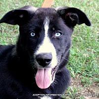 Adopt A Pet :: ROCKSTAR - PRINCETON, KY