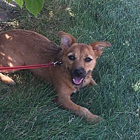 Adopt A Pet :: Lexi - Jerseyville, IL