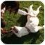 Photo 1 - American Bulldog Mix Dog for adoption in Redondo Beach, California - Happy - Courtesy