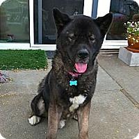 Adopt A Pet :: Noah - Hayward, CA