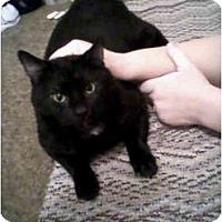 Adopt A Pet :: Boots - Washington Terrace, UT
