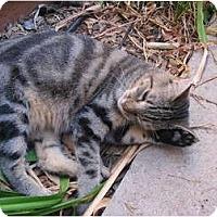 Adopt A Pet :: Pretty - Morgan Hill, CA