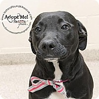 Adopt A Pet :: Gracie~Adopted - Troy, OH
