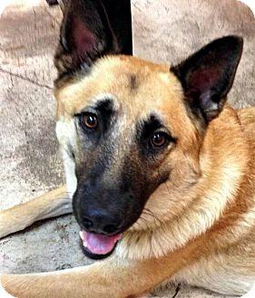 German Shepherd Dog Mix Dog for adoption in Fort Worth, Texas - Missy