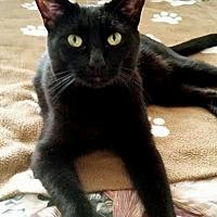 Adopt A Pet :: Paul - Palo Cedro, CA