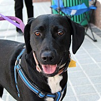 Adopt A Pet :: Ebony - Richmond, VA