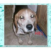 Adopt A Pet :: MEL - Ventnor City, NJ