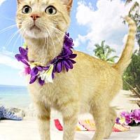 Adopt A Pet :: Fanta - Harrisonburg, VA