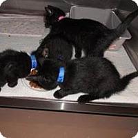 Adopt A Pet :: Skeeter - Belleville, MI