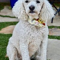 Adopt A Pet :: Wally - Irvine, CA