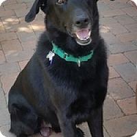 Adopt A Pet :: Poppie - Torrance, CA