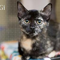 Adopt A Pet :: Gigi 17-0094 - Richardson, TX