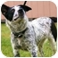 Photo 3 - Australian Cattle Dog Mix Dog for adoption in Walker, Michigan - Gretel