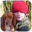 Photo 1 - Beagle Dog for adoption in Buffalo, New York - Mazzie: Purebred Coppernose