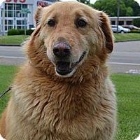 Adopt A Pet :: Zadie - Foster, RI