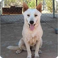 Adopt A Pet :: Carmella - Phoenix, AZ