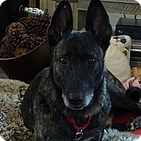Adopt A Pet :: Freya in IL - Jamestown, CA