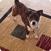 Adopt A Pet :: Matilda - Hazard, KY