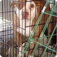 Adopt A Pet :: MISS PIGGY - Fowler, CA