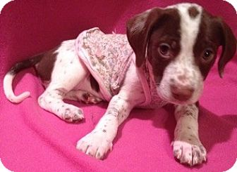Terrier (Unknown Type, Medium) Mix Puppy for adoption in Milton, New York - Tink