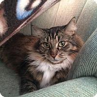 Adopt A Pet :: Paula - Edmonton, AB