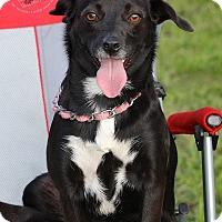 Adopt A Pet :: Maxine - Wilmington, DE