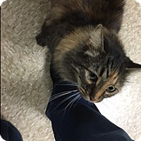 Adopt A Pet :: Bonnie - Medina, OH
