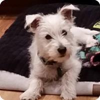 Adopt A Pet :: Ozzie - Omaha, NE