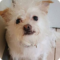 Adopt A Pet :: Frankie - Broadway, NJ