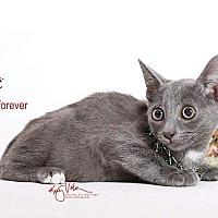 Adopt A Pet :: Moe - Sherman Oaks, CA
