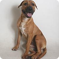 Adopt A Pet :: Dixon - Redding, CA