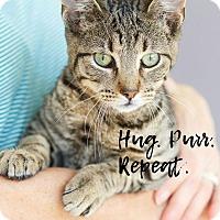 Adopt A Pet :: Qbie - Marietta, GA