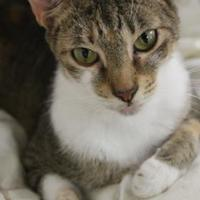 Adopt A Pet :: Peggy - Thomasville, GA