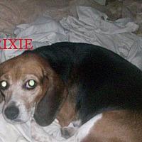 Adopt A Pet :: TRIXIE - Ventnor City, NJ