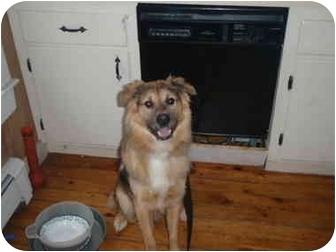 Nova Scotia Duck-Tolling Retriever/Catahoula Leopard Dog Mix Dog for adoption in New Boston, New Hampshire - Tucker