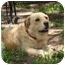 Photo 3 - Labrador Retriever/Terrier (Unknown Type, Small) Mix Dog for adoption in Kingwood, Texas - Buddy