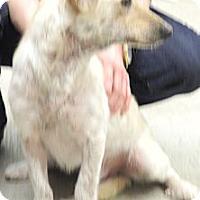 Adopt A Pet :: Possum - Centerpoint, IN