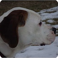 Adopt A Pet :: Ebbie - PENDING - Toronto/Etobicoke/GTA, ON